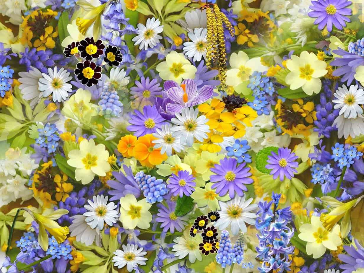 phytotherapie etude et composition de la fleur