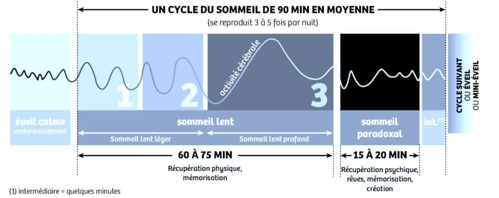 Comprendre le cycle du sommeil remede insomnie