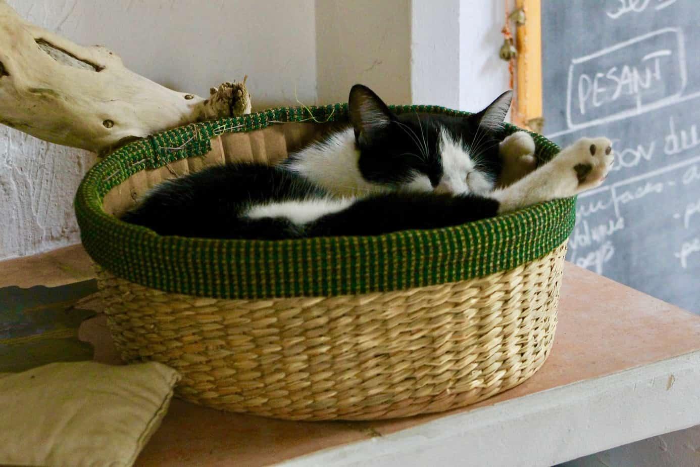 allergies animaux de compagnie remede insomnie